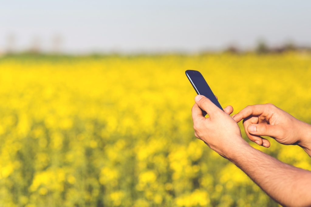 Man holding cell phone with canola field in background